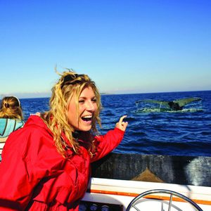 4. Go whale watching.