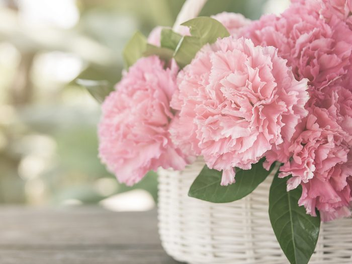 Flower Meanings: Carnations