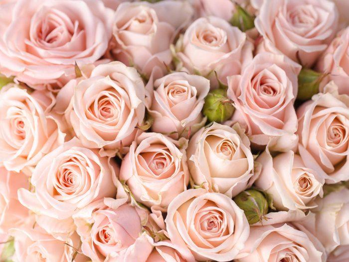Flower Meanings: Roses