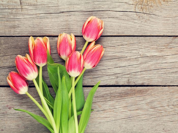 Flower Meanings: Tulips