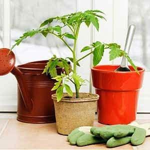 8. Relocate Houseplants