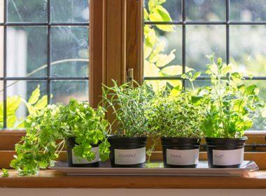 4 Ways to Grow Edible Plants Indoors