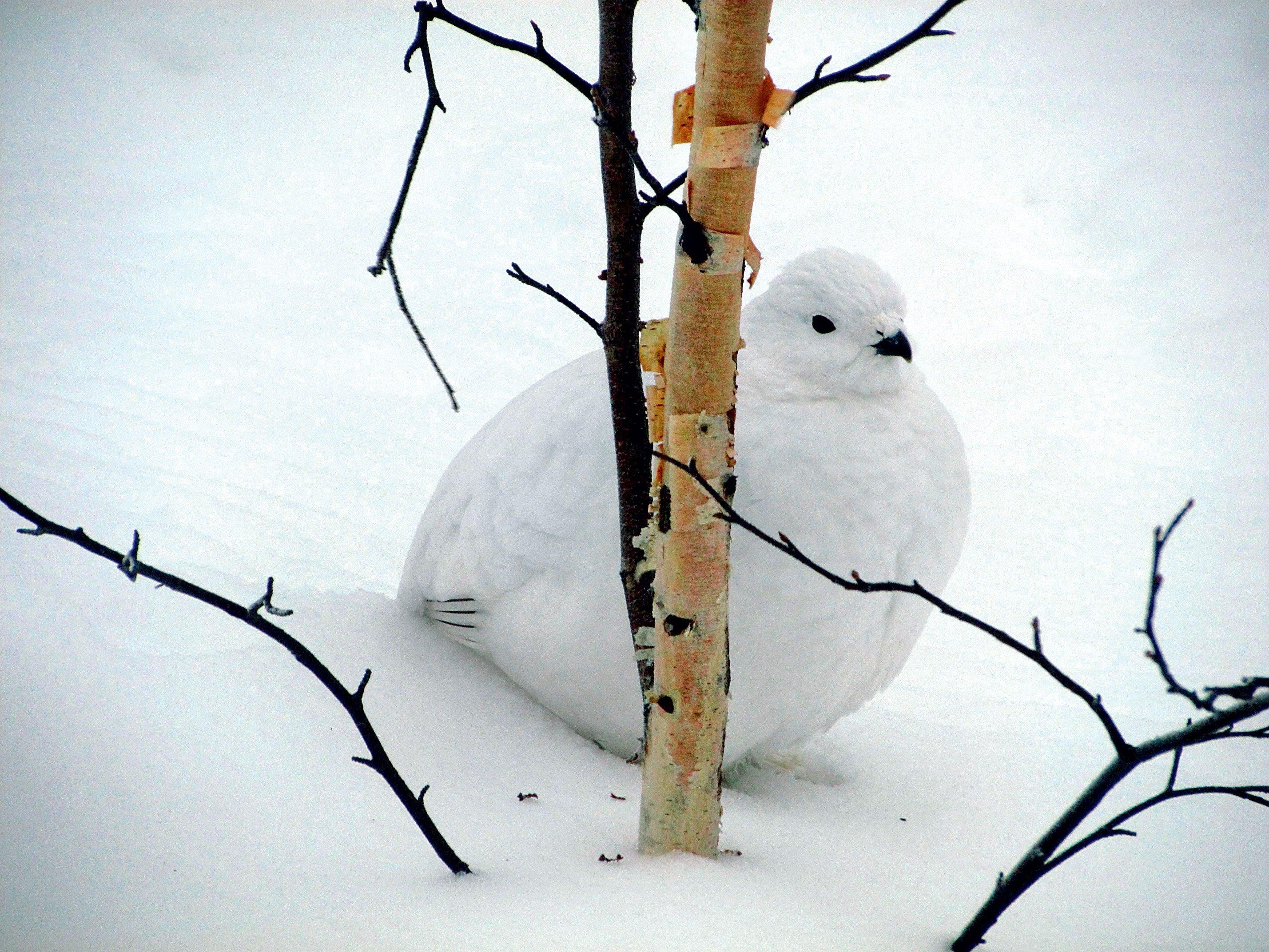 Winter in Canada: A Real Snowbird