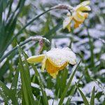 8 Winter Prep Tips for Your Garden