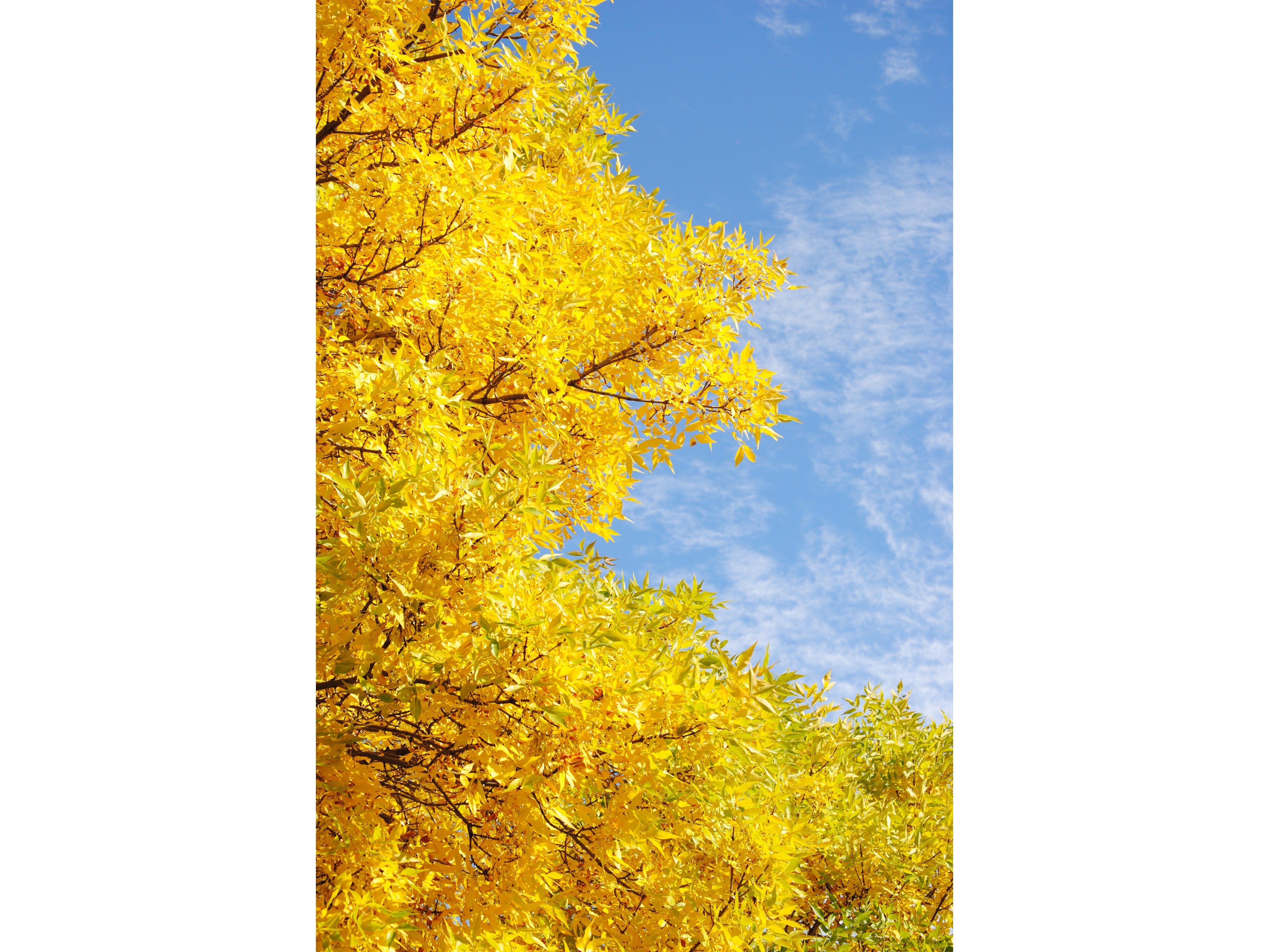 Falling for yellow