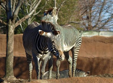 St. Louis Zoological Park - St. Louis, USA