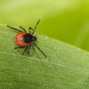 6 Things You Need to Know About Lyme Disease in Canada