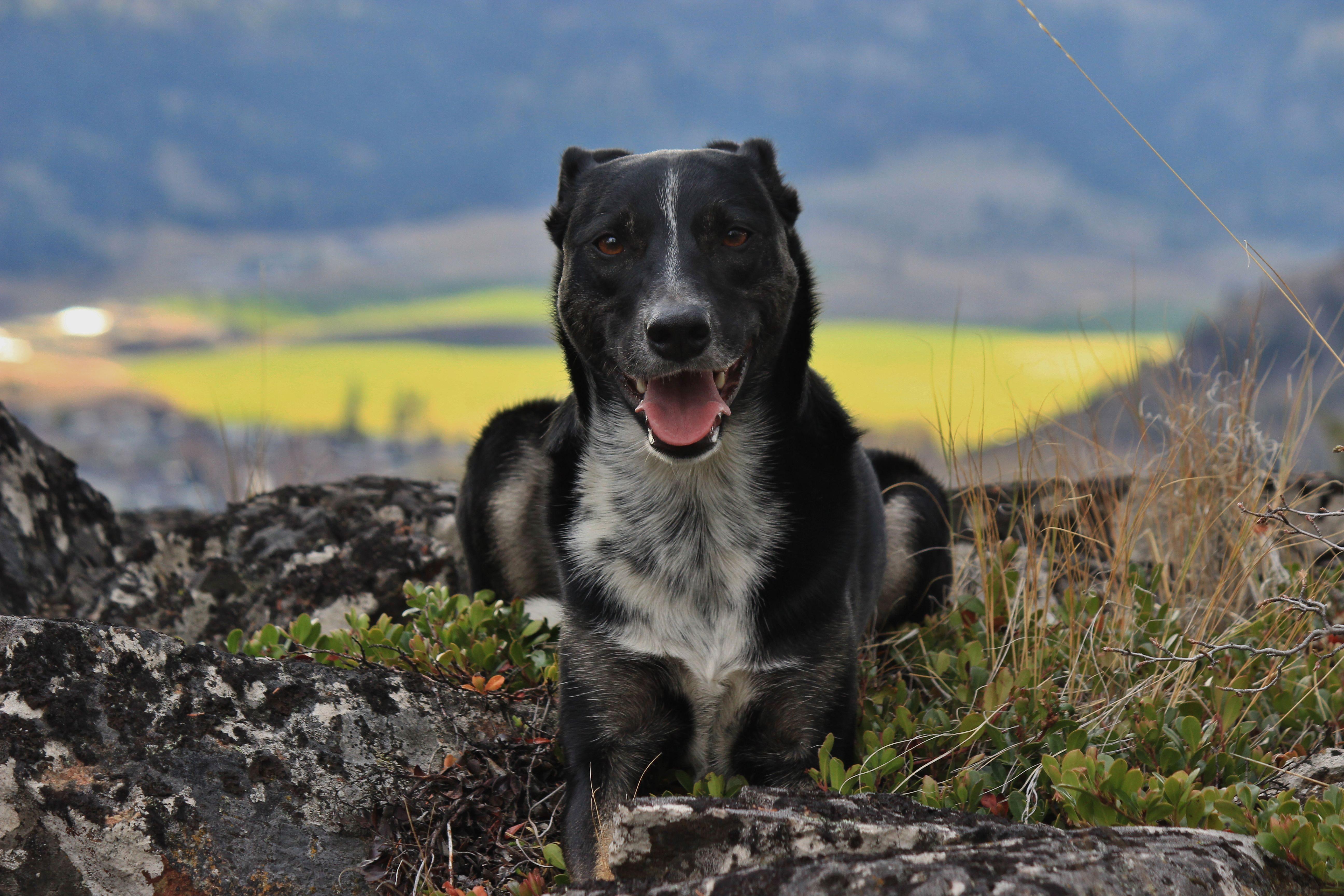 four-legged-friends-black-dog