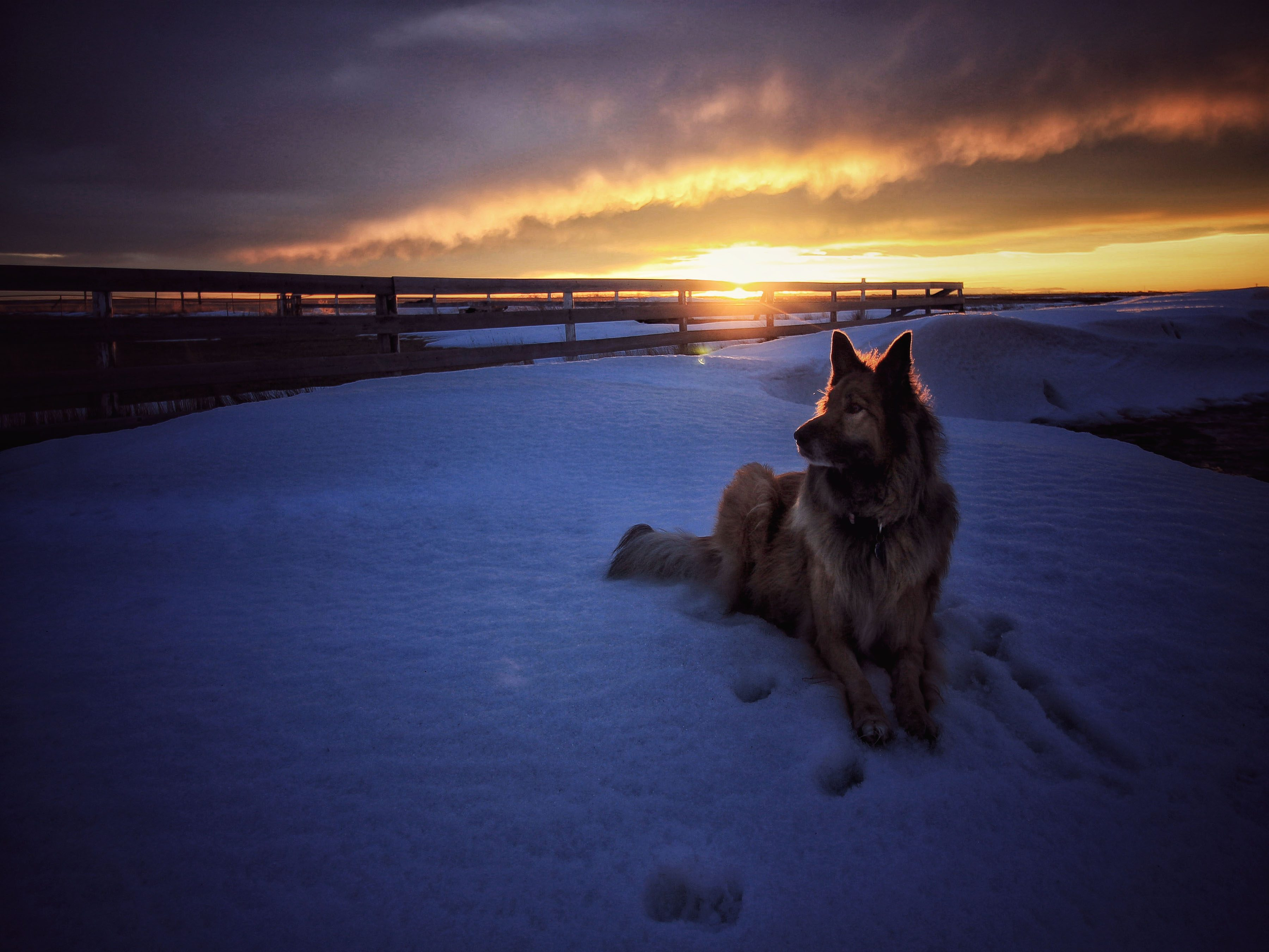 Dog on snowy field against a sunset