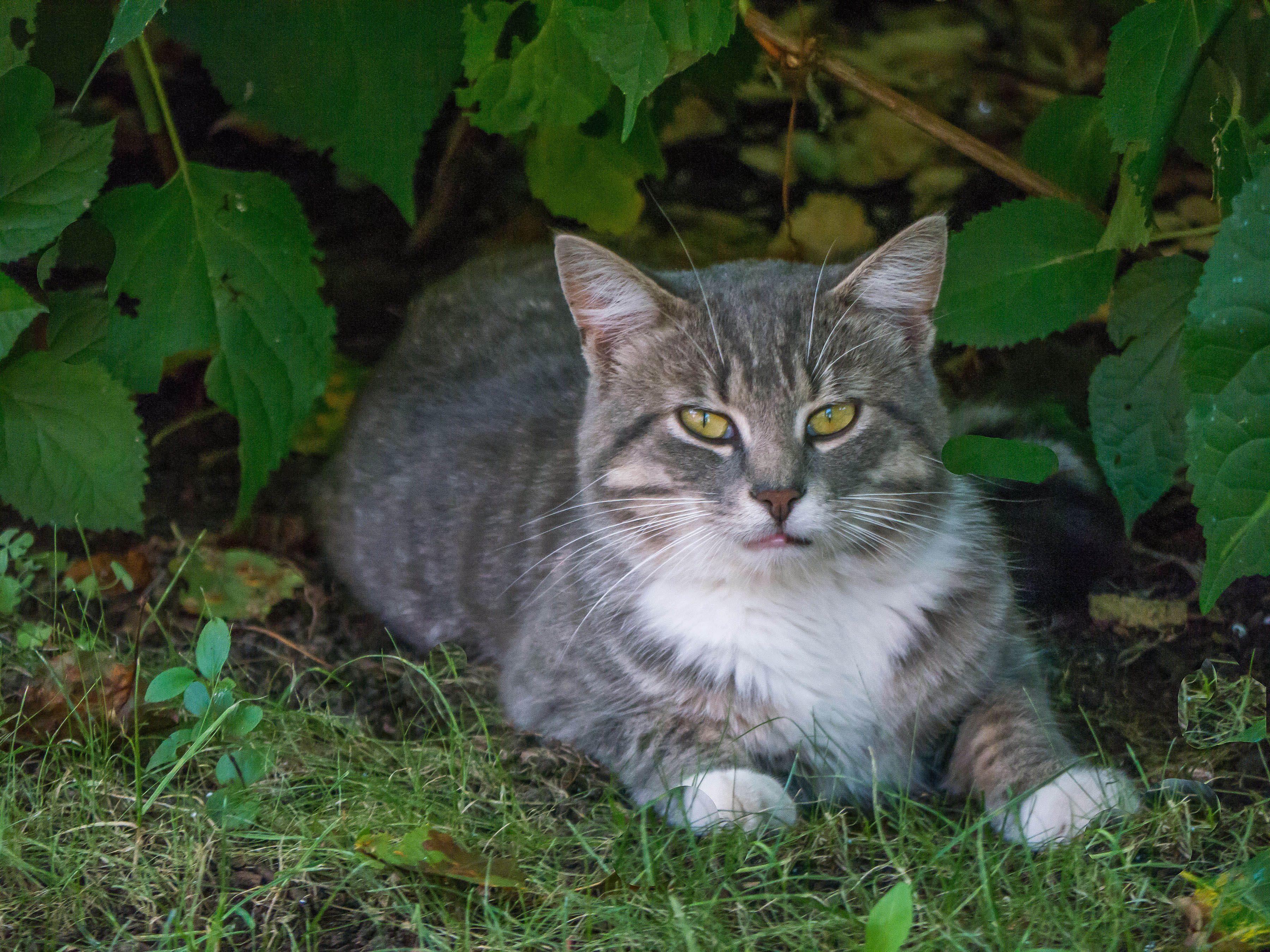 Stray cat sitting near trees