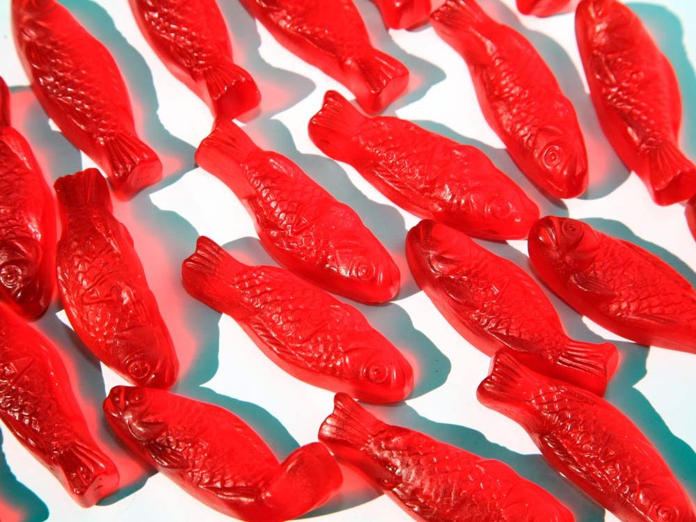 Gummy fish candy