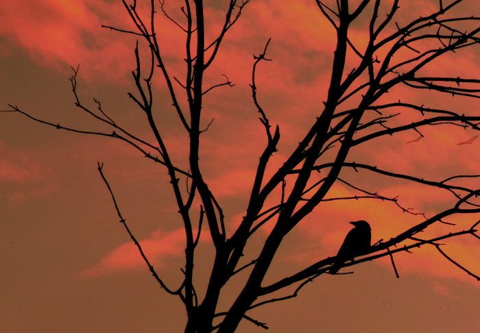 Bird sitting on tree branch at dawn