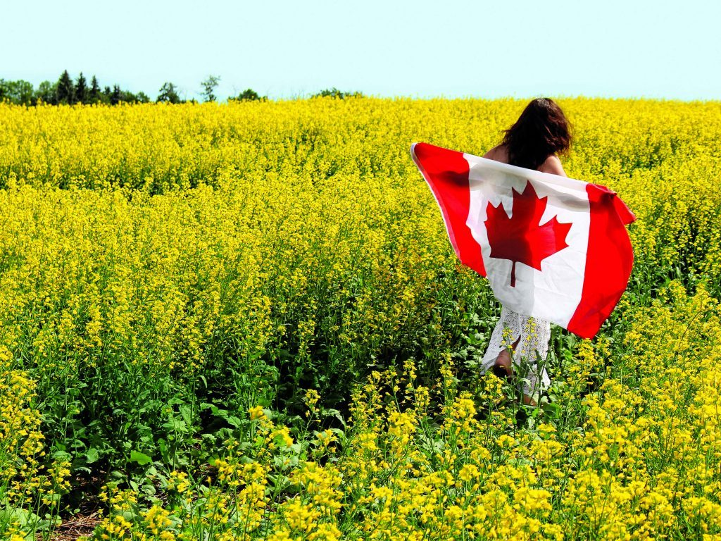 Woman with Canadian flag in canola field
