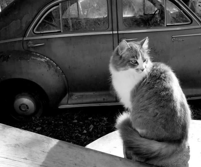 Cat seated next to car at farm