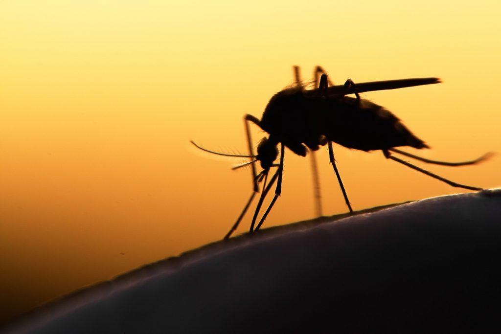 Mosquito silhouette
