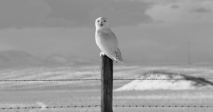 Owl perched on fence