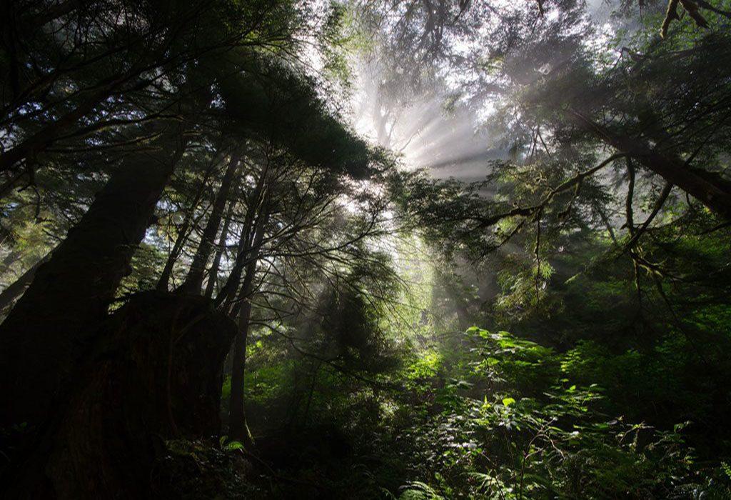 Hiking trail in Canada