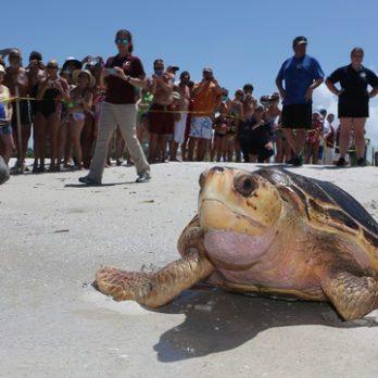 Top 10 Travel Destinations to Help Sea Turtles