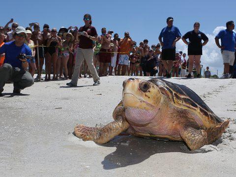 helping-sea-turtles-in-florida