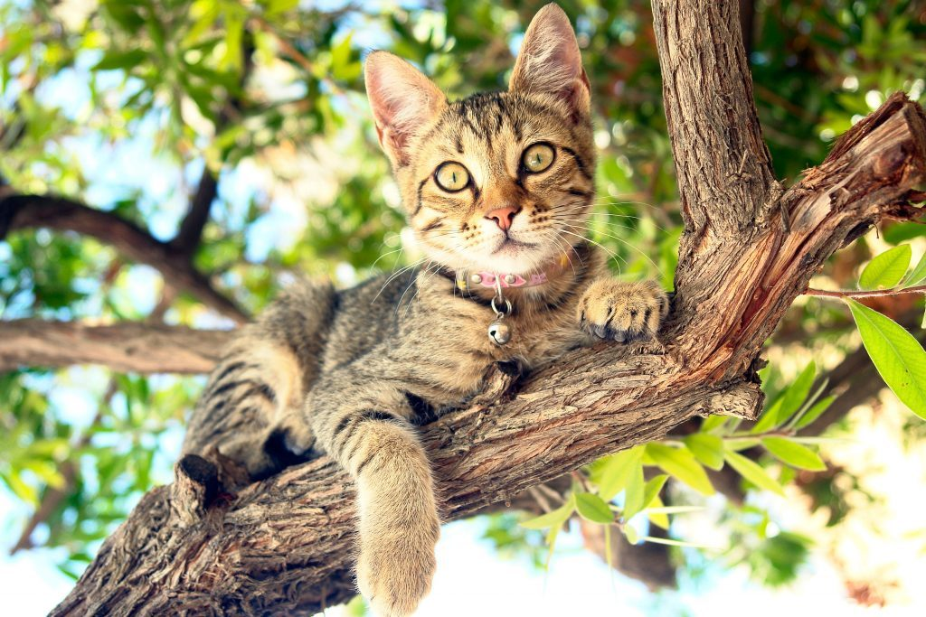 Cat sitting on tree branch