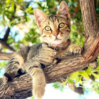 4 Summer Safety Tips for Cats