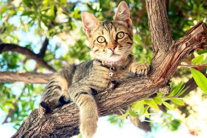 Cat sitting on tree branch