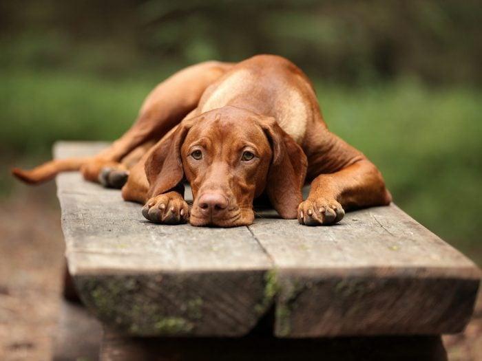word power test - Depressed dog