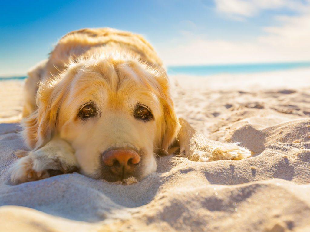 Sad dog on beach