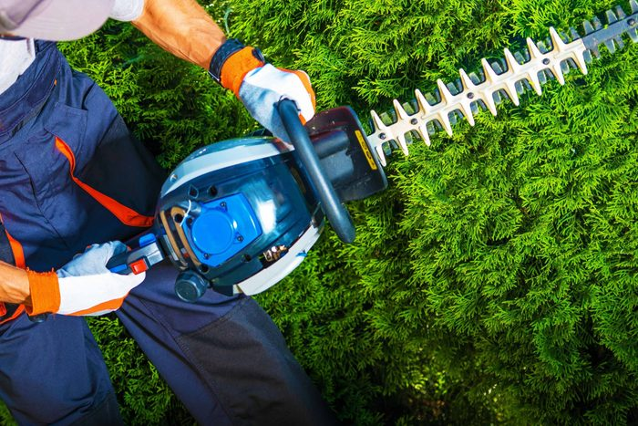 Professional gardener/landscaper