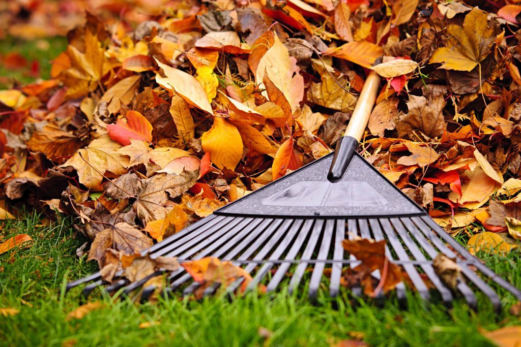 Rake and leaves