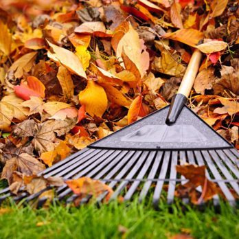 8  Autumn Chores for the Lazy Gardener