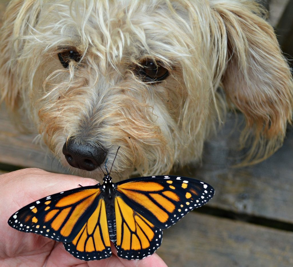 Dog meeting a butterfly