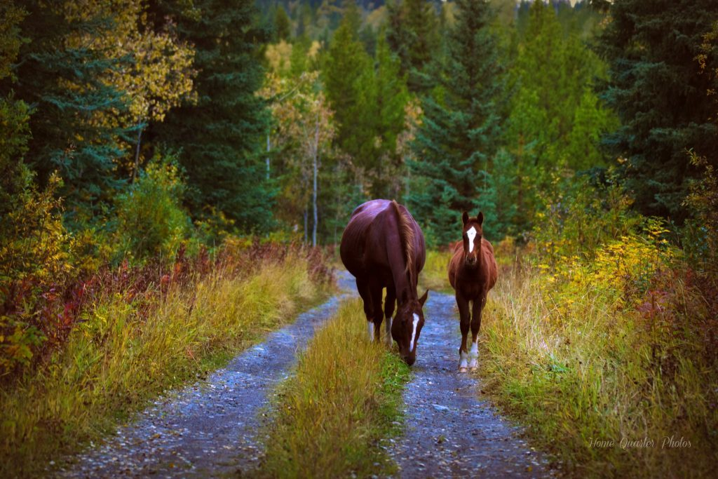 our-canada-big-small-horses