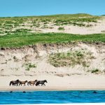 Canada's Must-See Destinations: Sable Island