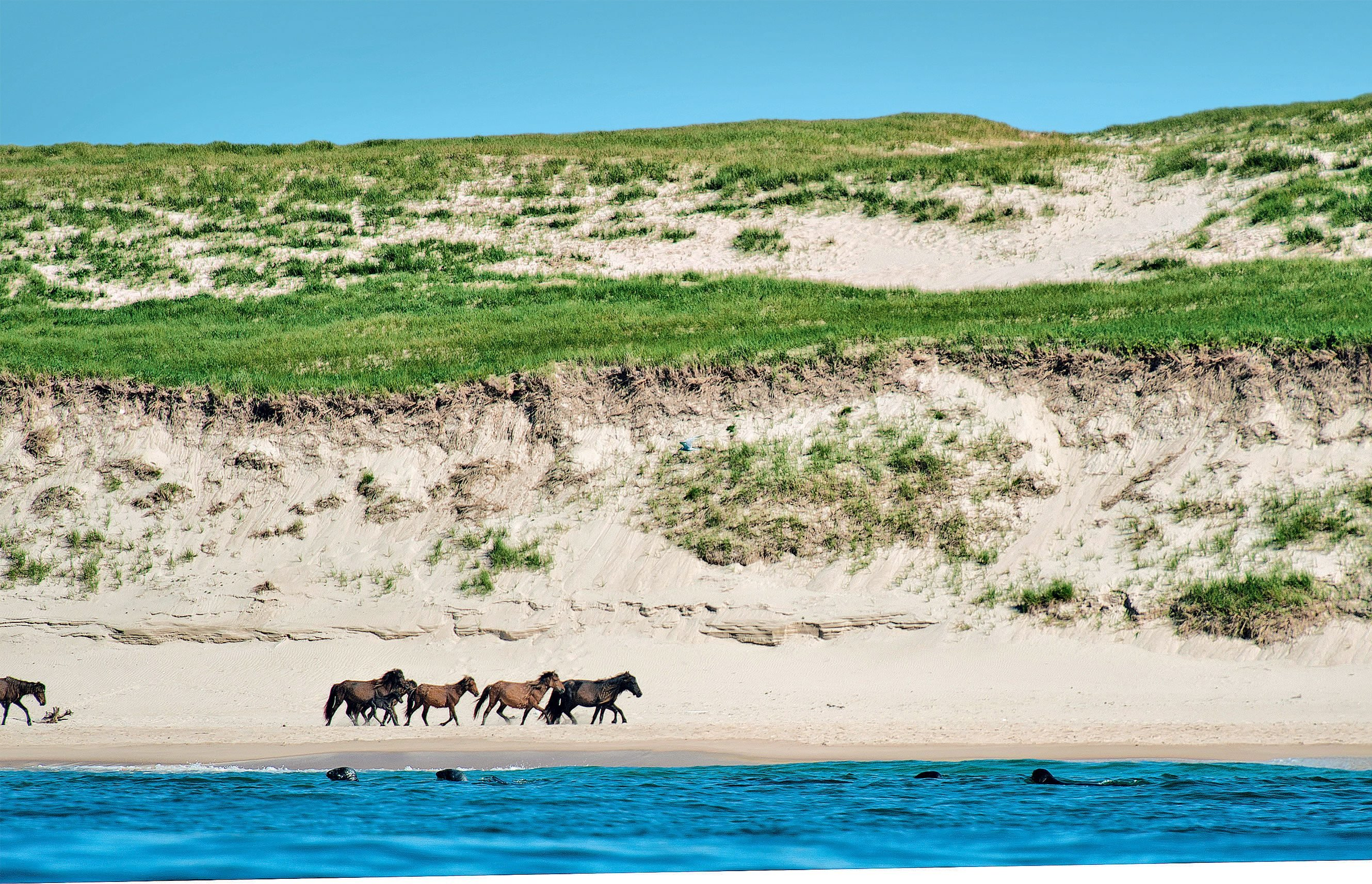 sable-island-national-park