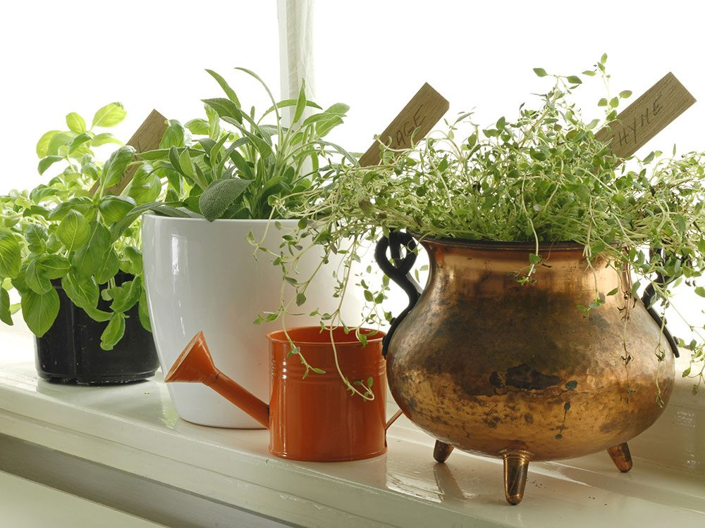 Grow anywhere indoor gardening tips for winter for Indoor gardening during winter