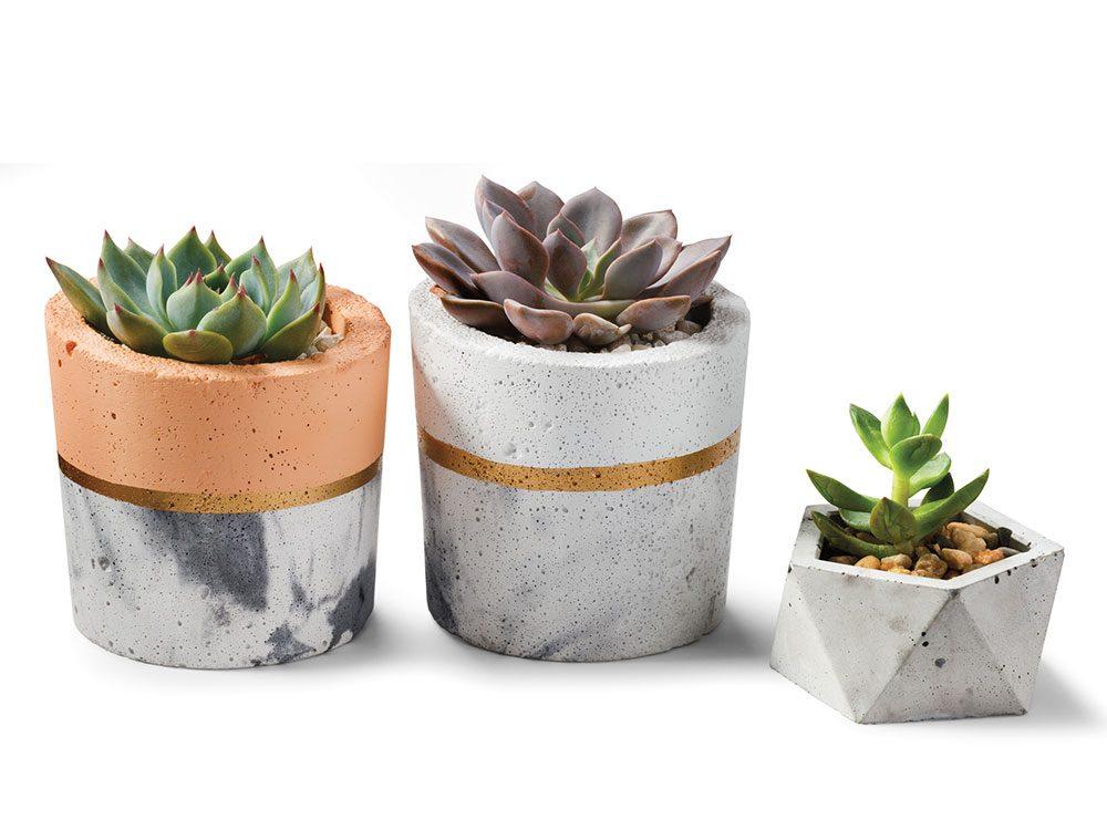 Concrete plants with succulents