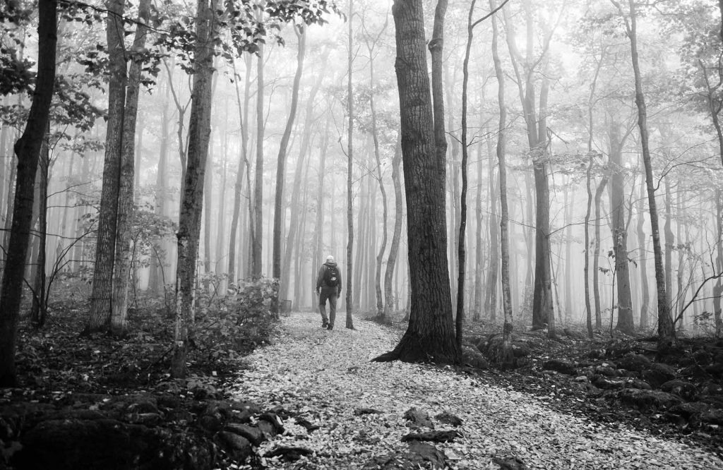 Man walking through woods in Collingwood, Ontario