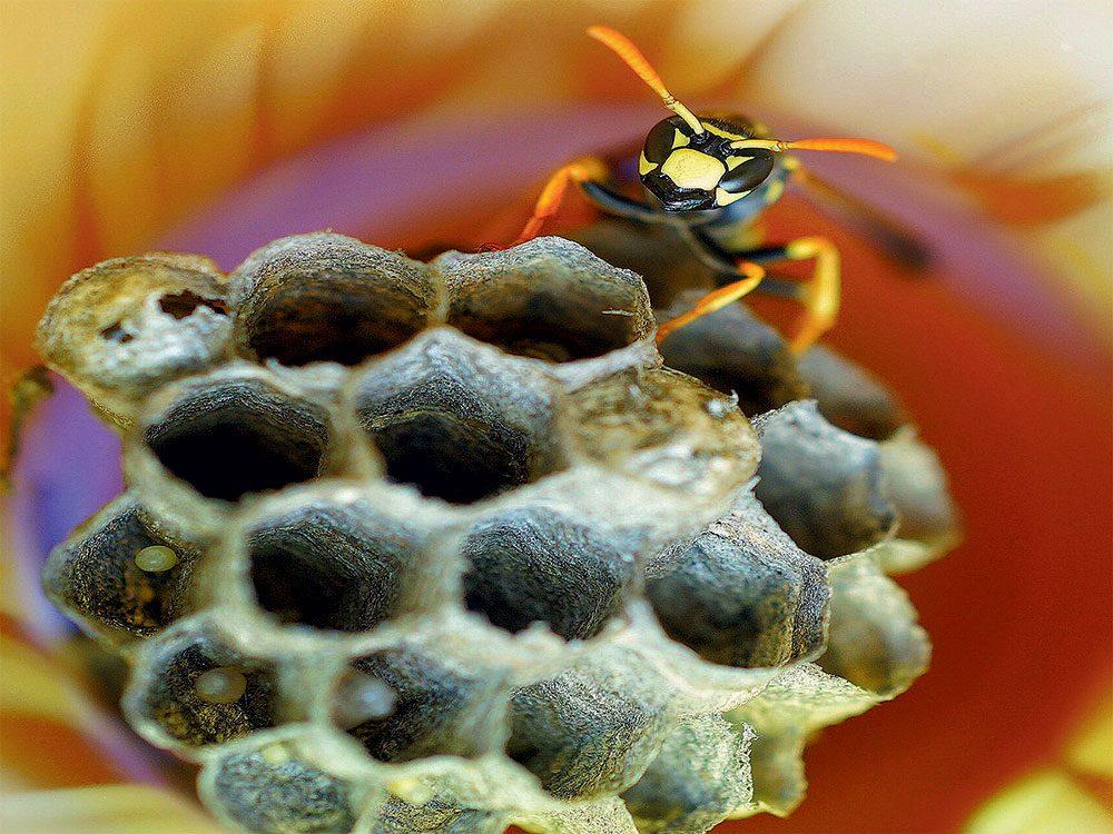 Bee inside solar light
