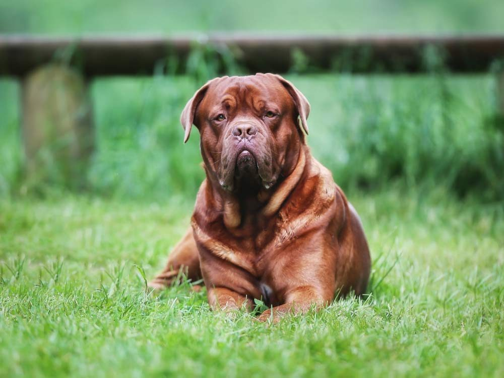 Good Natured Dog Food Amount