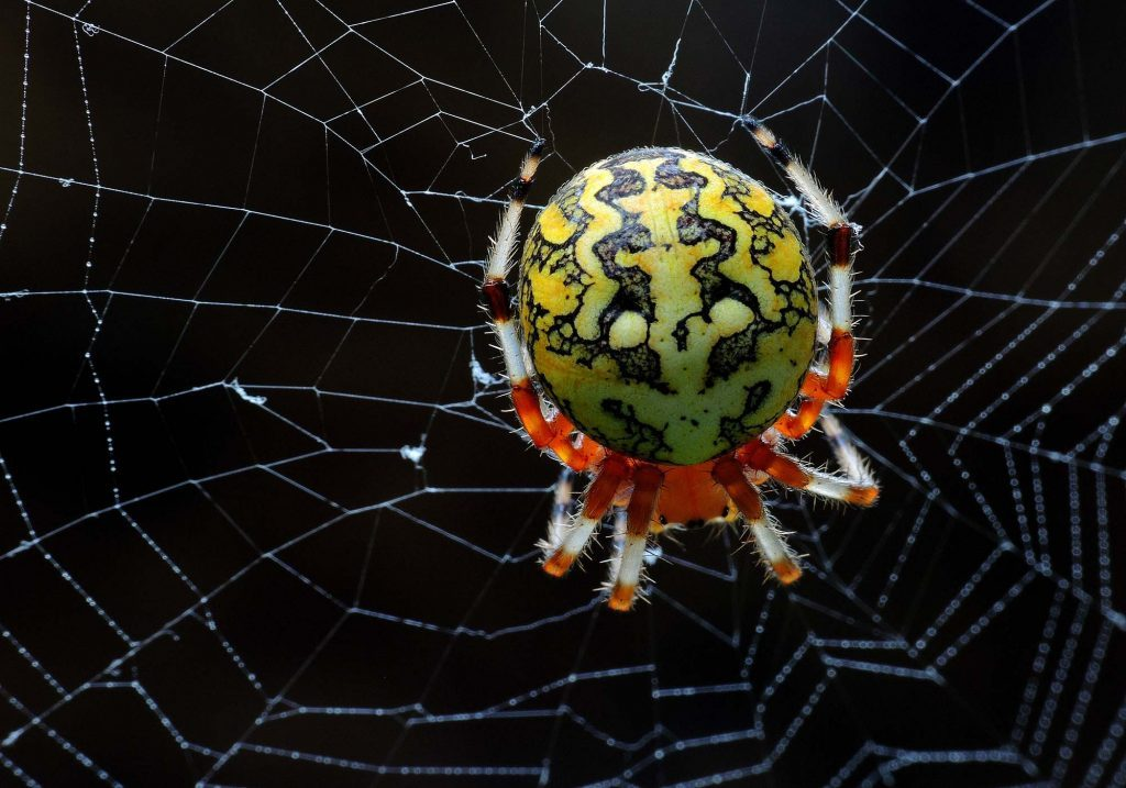 Scary spider on spiderweb