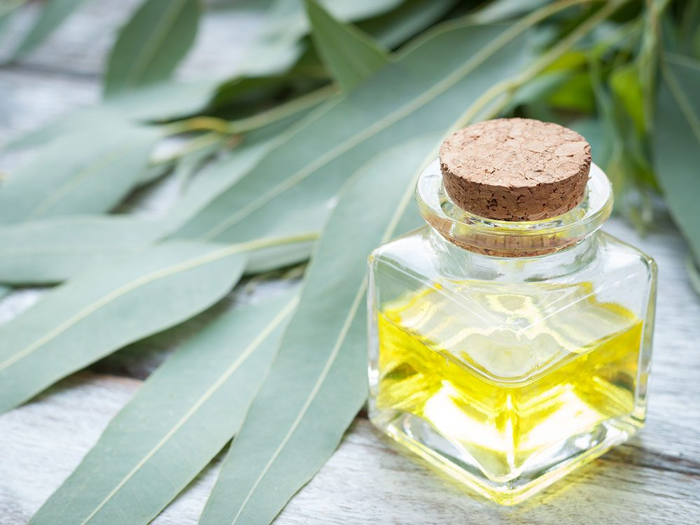 Eucalyptus oil and leaves