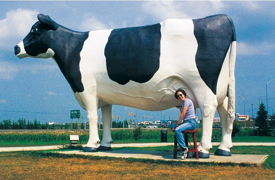 Giant cow, Miss Claybelt