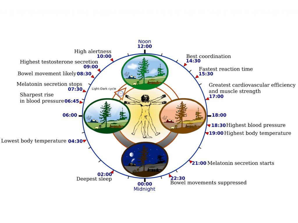 Circadian rhythm cycle
