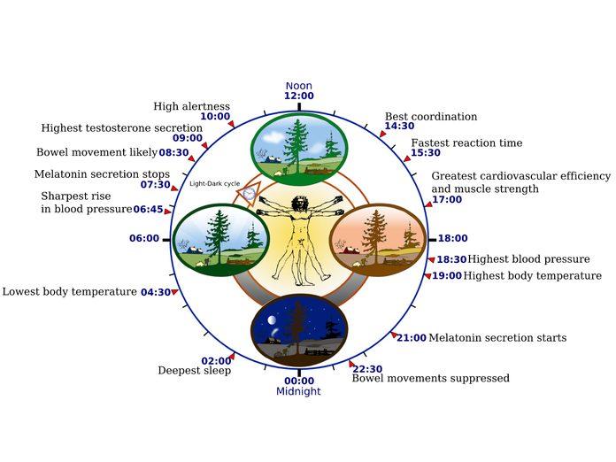 Circadian rhythm cycle