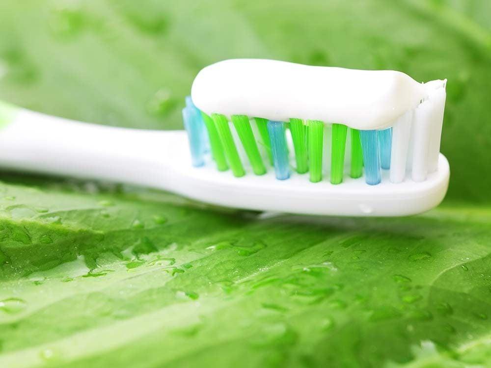 White toothpaste on mint leaf