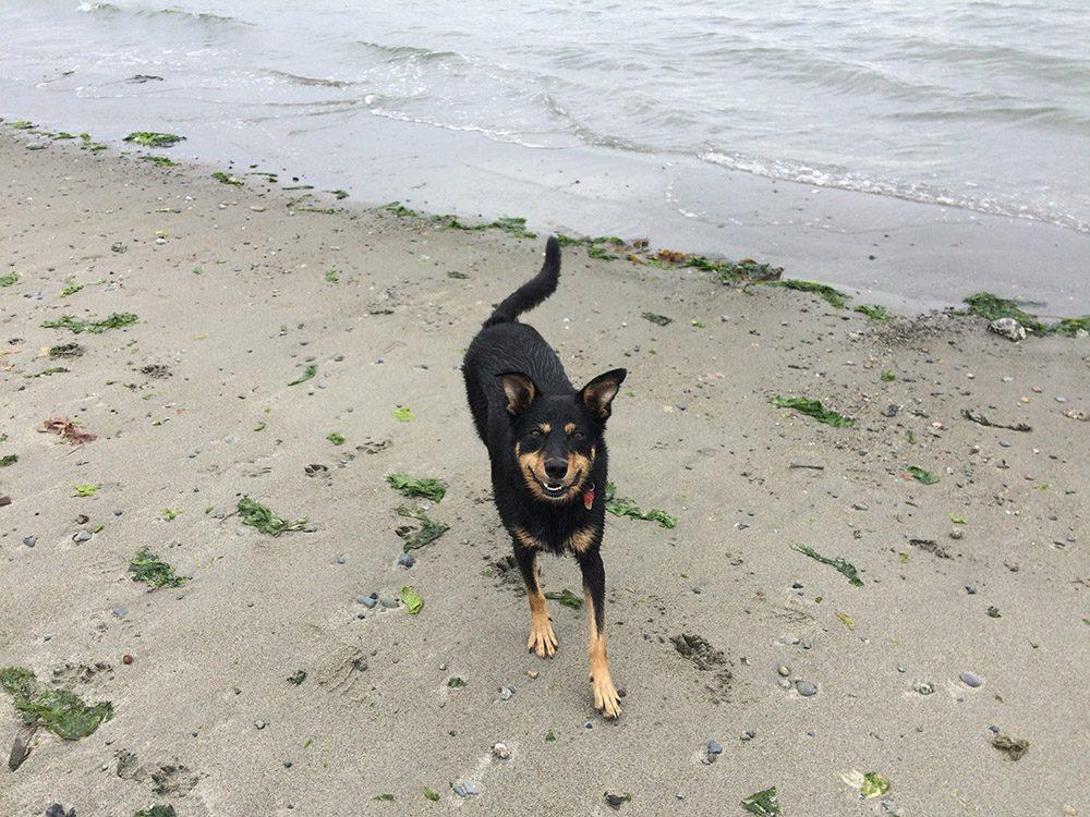 Black dog near ocean
