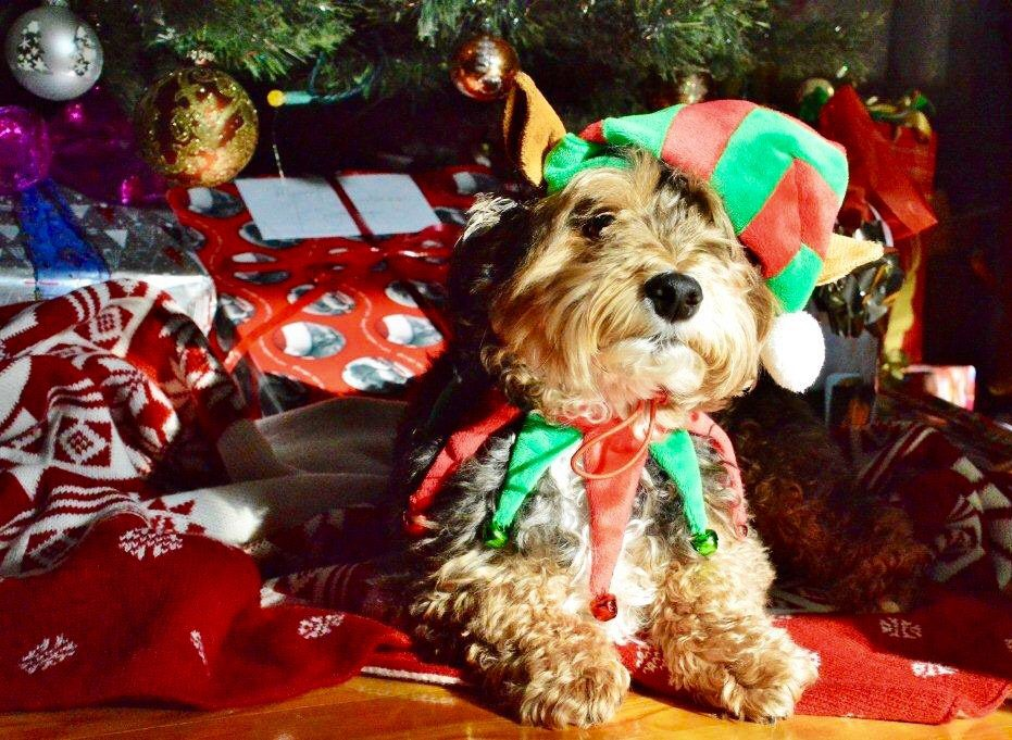 Cute dog wearing Christmas hat