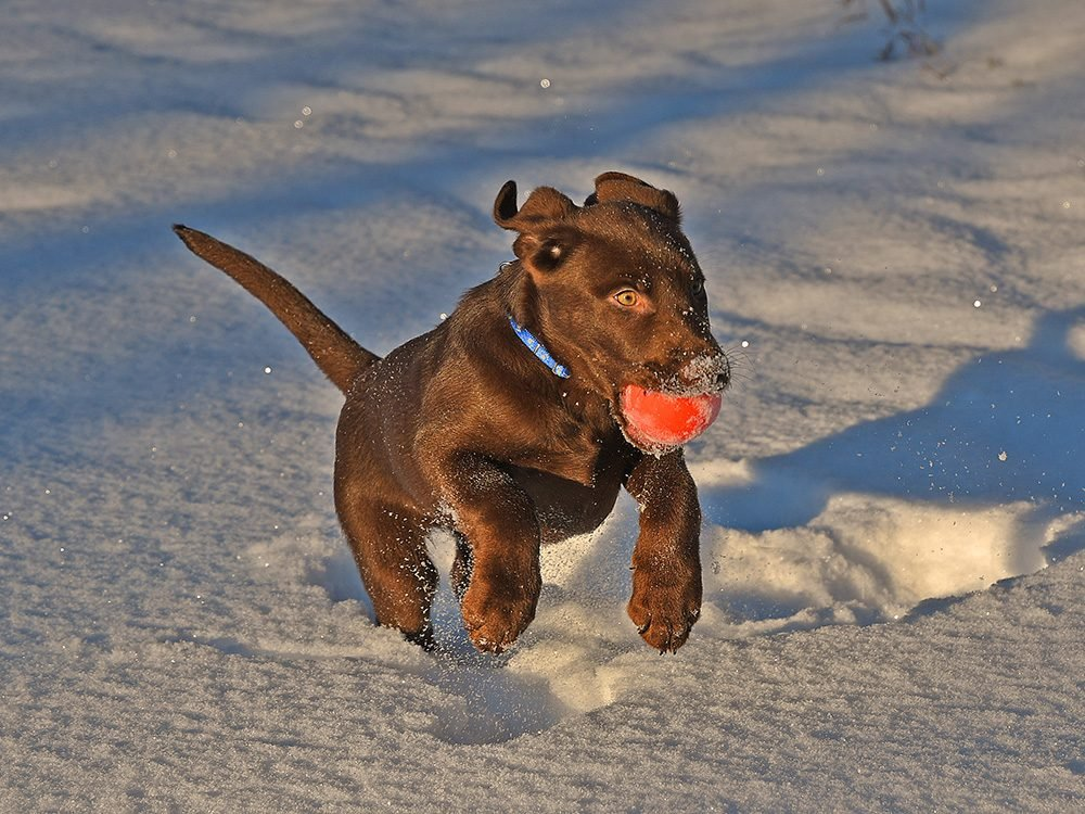 Dog playing fetch with ball