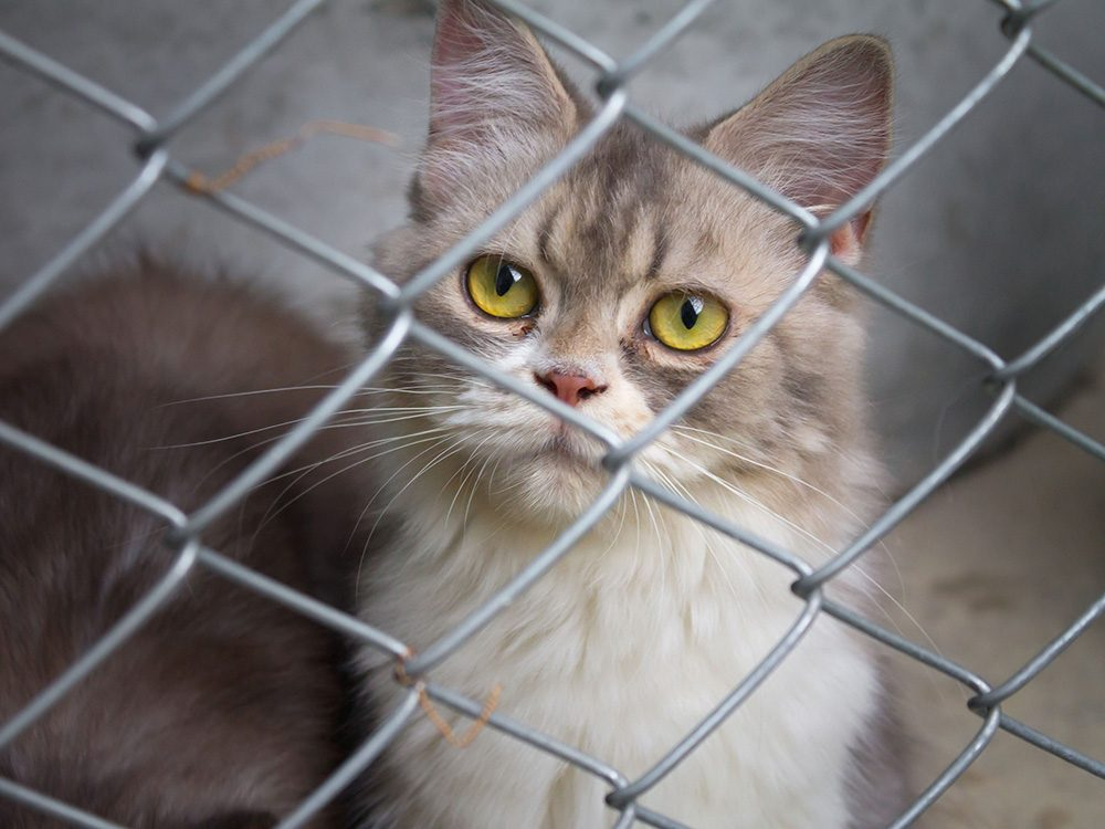 Cat at animal shelter